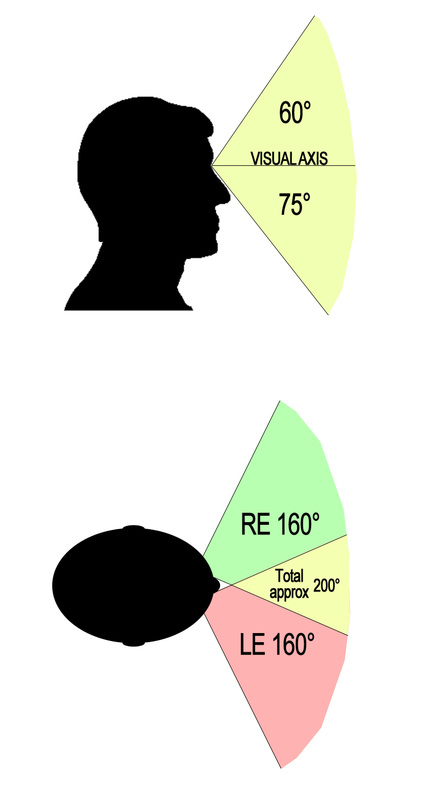 The full human visual field extends approximately 200 degrees horizontally and 135 degrees vertically.